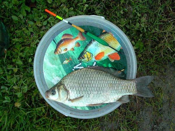 Карась. Методы ловли • Методы ловли • Рыбалка в Калининграде ...