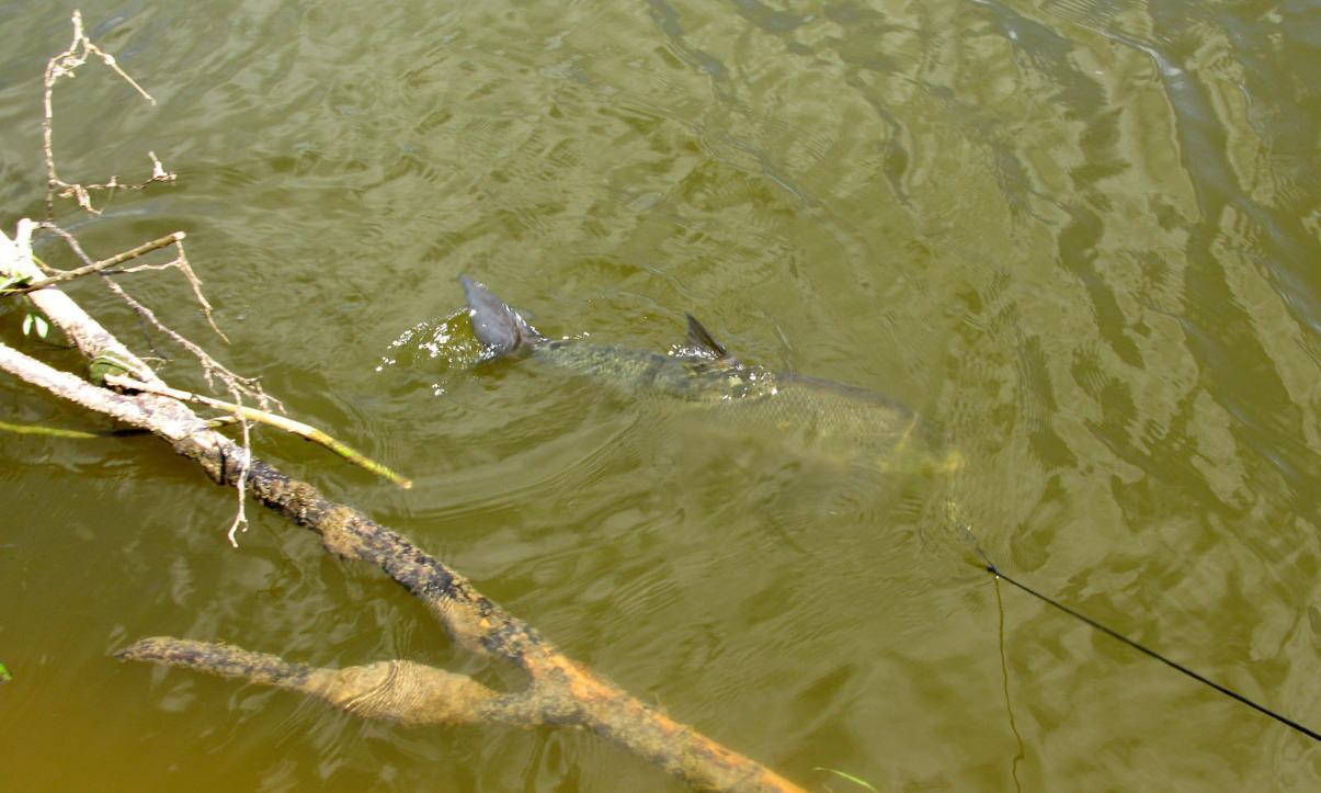 рыбацкие суеверия приметы и поверья рыбаков