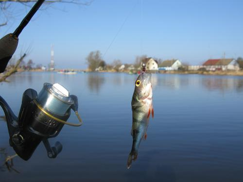 прогноз клева рыбца в калининградской области